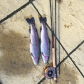 The brace of Rainbows caught by Martin